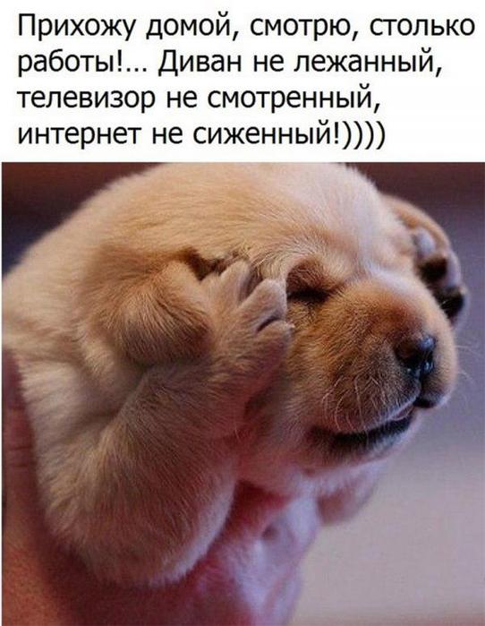 smeshnie_kartinki_153360311184 (542x700, 321Kb)