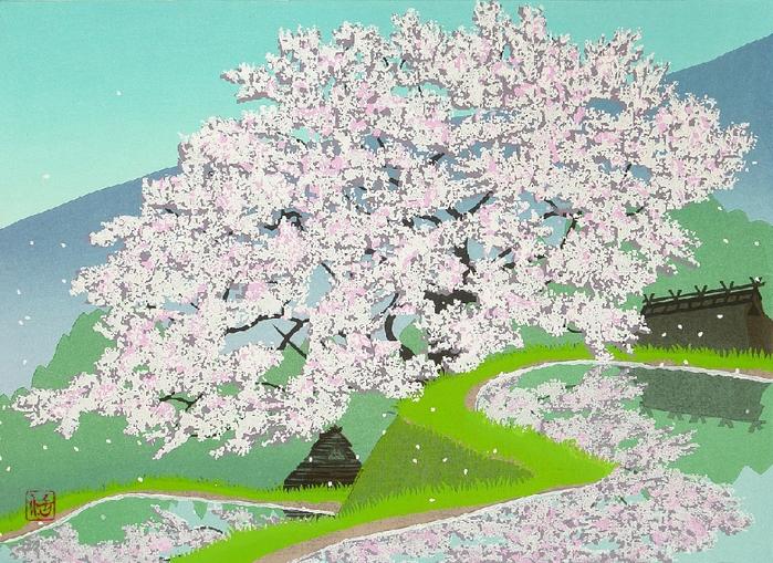 Cherry Tree on Hillside Rice Field (700x509, 499Kb)