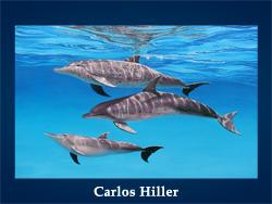 5107871_Bill_Myrick (250x188, 67Kb)/5107871_Carlos_Hiller (250x188, 79Kb)