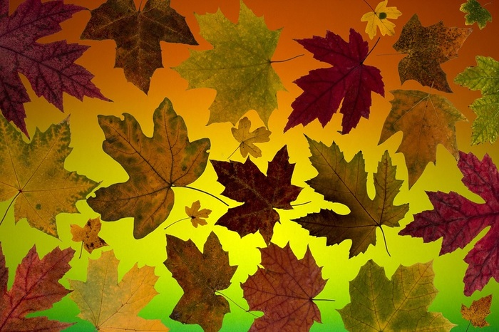 4953664_leaves1469934_1280 (700x466, 142Kb)