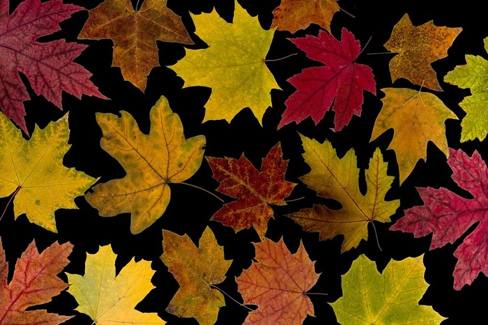 4953664_leaves1544063_1280 (700x466, 147Kb)