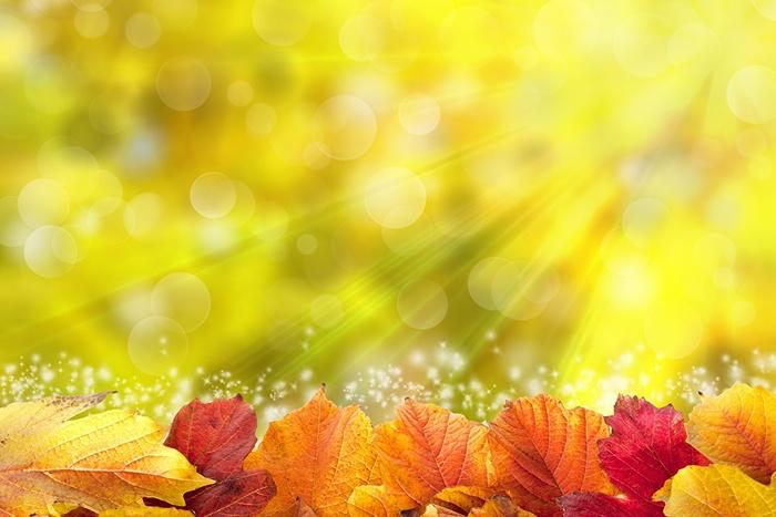 5152557_Autumn_Foliage_Rays_of_447310 (700x467, 98Kb)