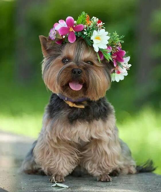 Картинки маленькие собаки прикольные, первому мая