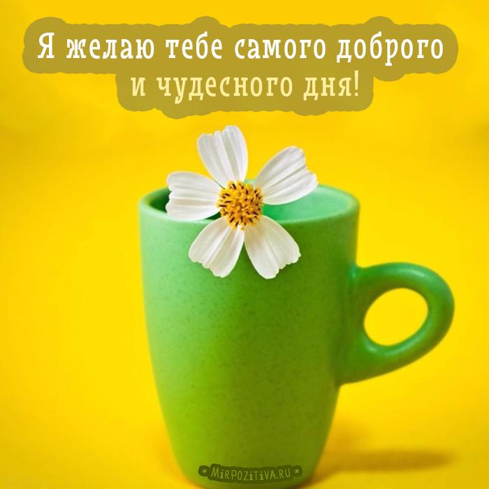 позитивные картинки с пожеланиями доброго утра и удачного дня доставки книг используется