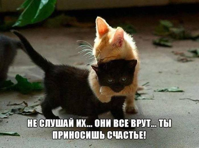 https://img0.liveinternet.ru/images/attach/d/2/150/414/150414226_3416556_70420994_512023122893111_6282680011719704576_n_1_.jpg