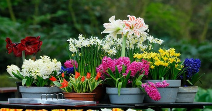 Какие удобрения нужны комнатным цветам