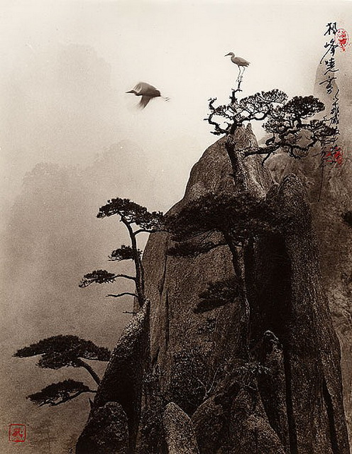 Автор фото Don Hong-Oai. (496x640, 150Kb)