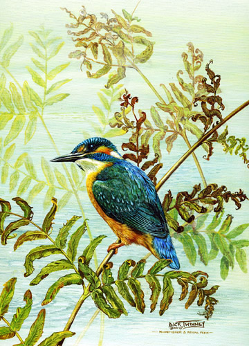 kingfisher-and-royal-fern (2) (360x500, 133Kb)