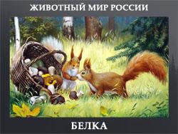 5107871_BELKA (250x188, 58Kb)