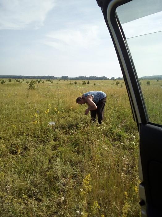 Саша собирает землянику