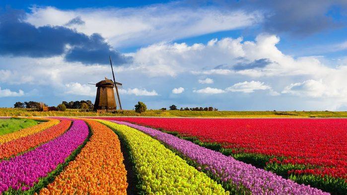 кёкенхоф-нидерланды (700x393, 69Kb)