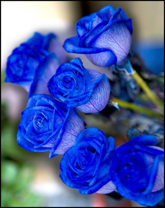 Розы синие потому-что алкотимовские.