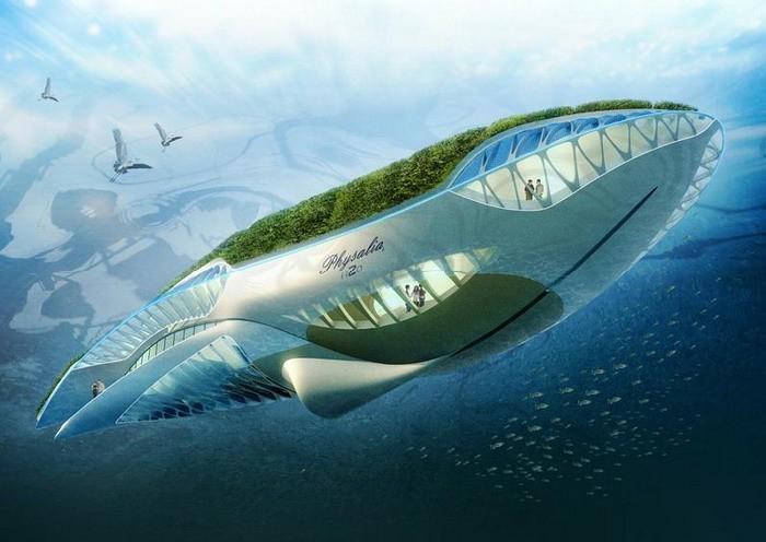 tasarım. balina.  Callabuat'un tasarımları kesinlikle fantastik ancak.