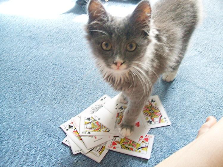 Кот карты играть все про онлайн рулетку