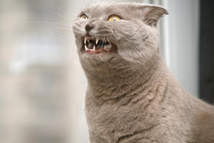 Открытки для, смешные картинки со словами животные