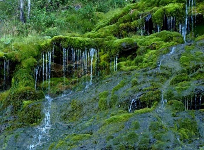 природа тайга фото