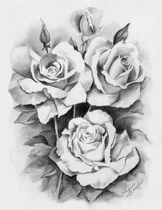 рисунки цветы картинки карандашом