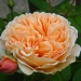 Crown_Princess_Margareta.