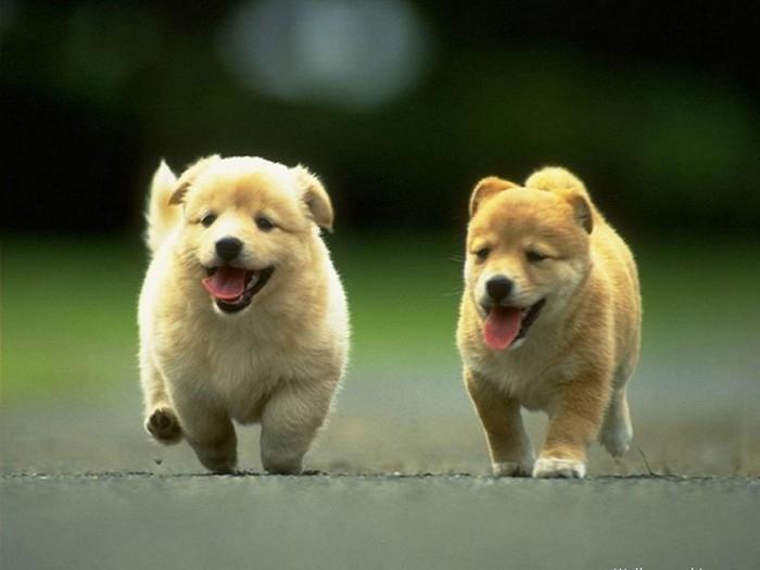 милые псы