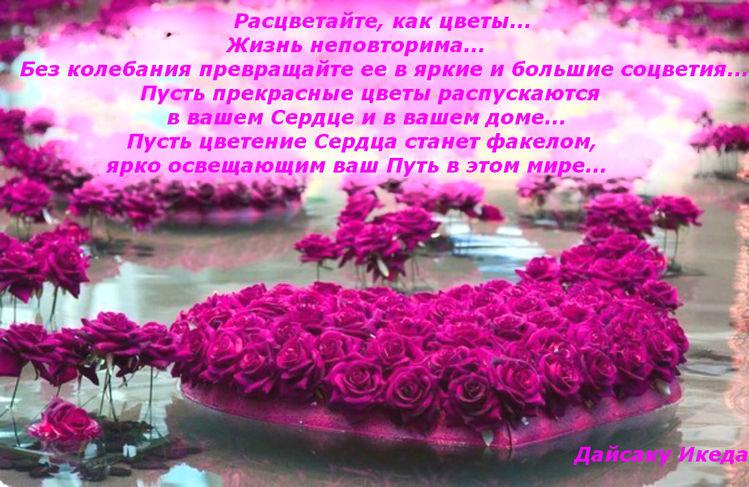 стих для статуса под фото с цветами дорожка мульчи древесная