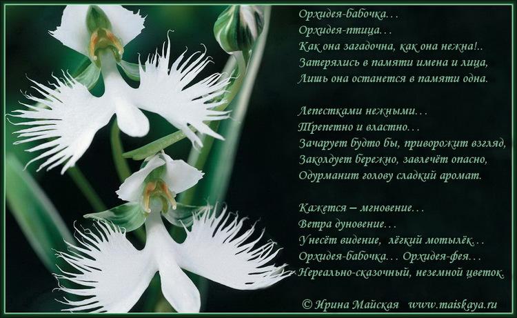 Стихи про орхидею для детей короткие