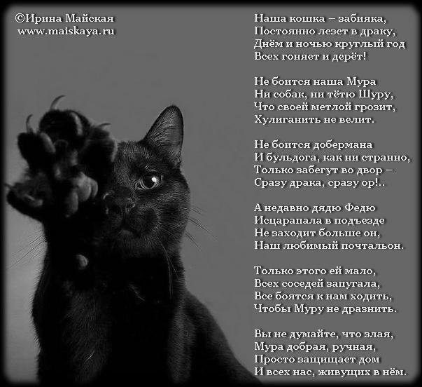 стихи про котика любимого этой статье