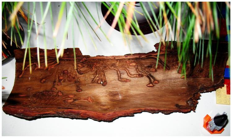 Панно из сосновой коры фото перетаскиваем фотографию