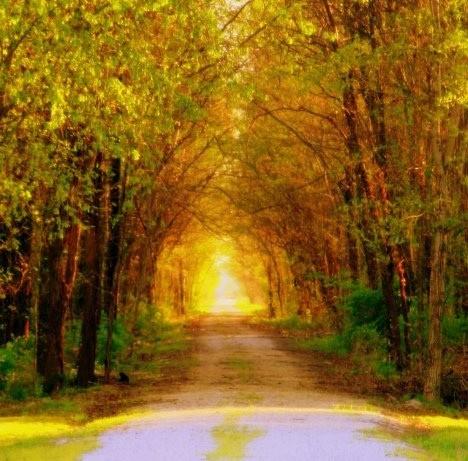 Туннели из деревьев